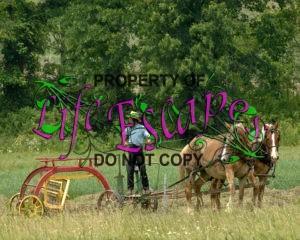 AmishRakingHay