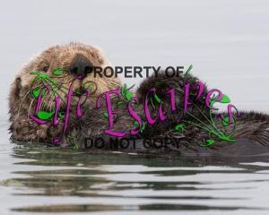 Sea-otter-morro-bay_13