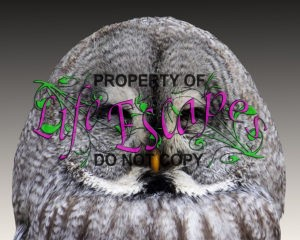 animal-owl-eagle-owl-wisdom-48155