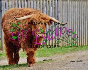 bull-1615751