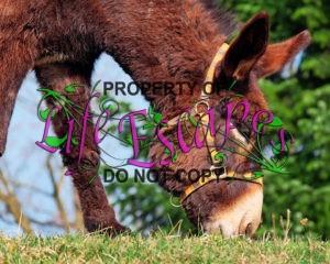 donkey-1268897