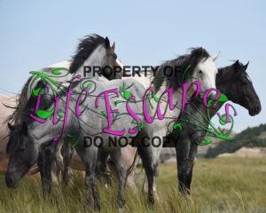 feral-horses-1374031