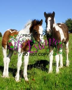 foals-1746730