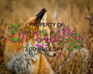 fox-1748640