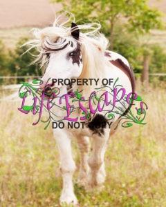 horse-1198001