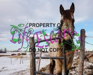 horse-1245923