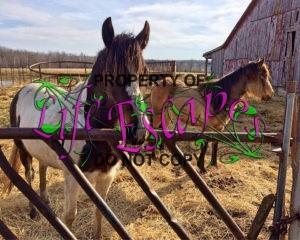 horse-1256458