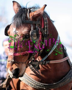 horse-1265648
