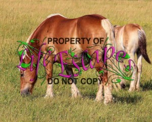 horse-1270698