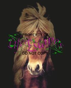 horse-1279231