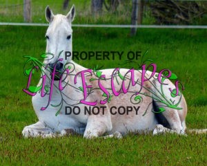 horse-1349273