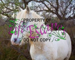 horse-1400685