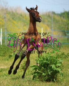 horse-1411470