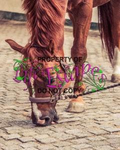 horse-1566826