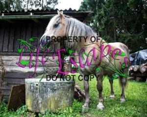 horse-1607318