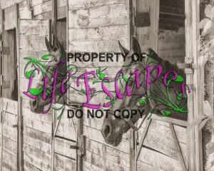 horse-1618104