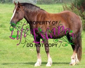 horse-1647379