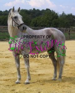 horse-1660729
