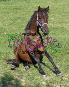 horse-1665672