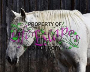 horse-1700438