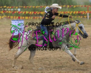 horse-1731296