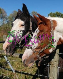 horse-1782705