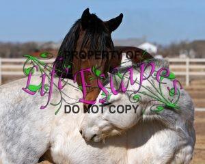 horse-423009-c