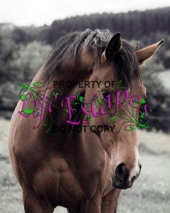horse-458410-c