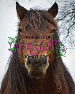 horse-678317
