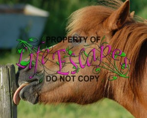 horse-795192