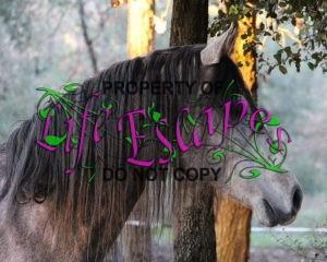 horse-943011