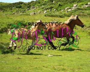 horses-1123042