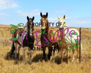 horses-1221350