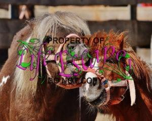 horses-1347865