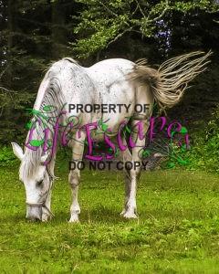 horses-903967