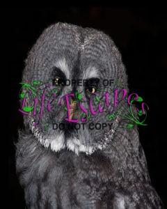 owl-611646