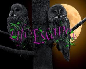 owl-706733