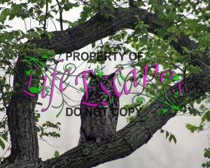 owl-72145
