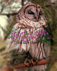 owl-840430