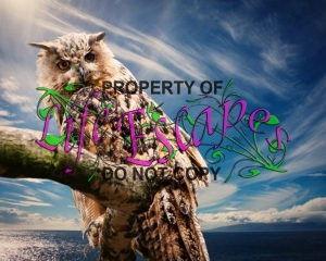 owl-nature-sky-clouds-39575