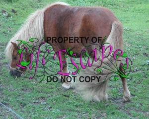 pony-177574