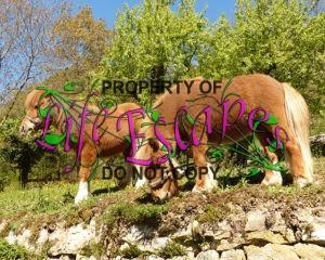 pony-357739