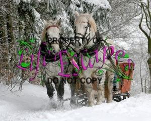 sleigh-ride-549727