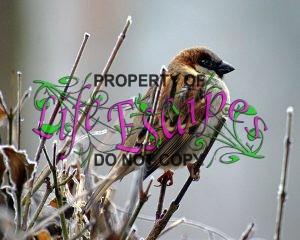 sparrow-50346-c