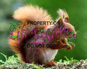 squirrel-493790