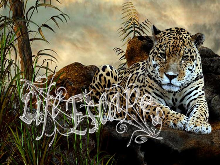 Big-Cats-wild-animals-34365415-1920-1080