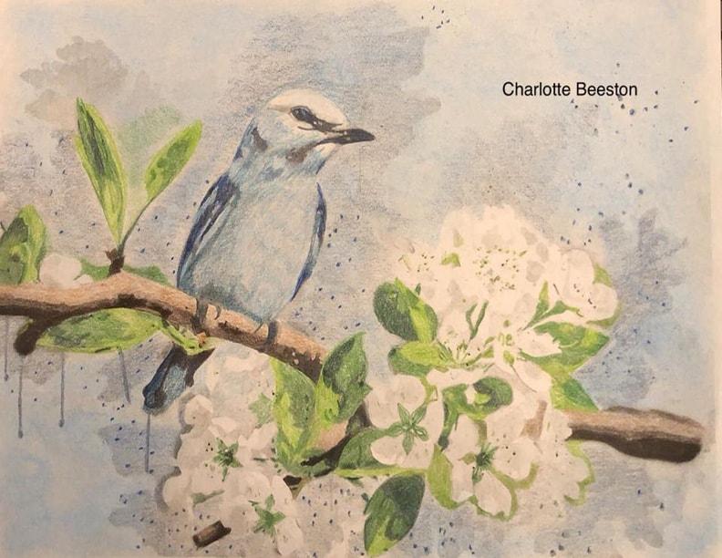 Charlotte Schroeder Beeston4