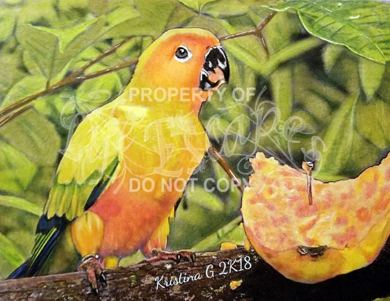 Colorful birds - Kristine Ferrara Grigoli