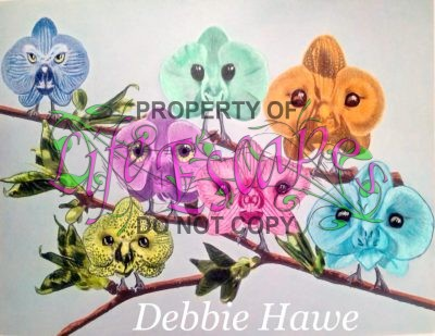 Debbie Hawe