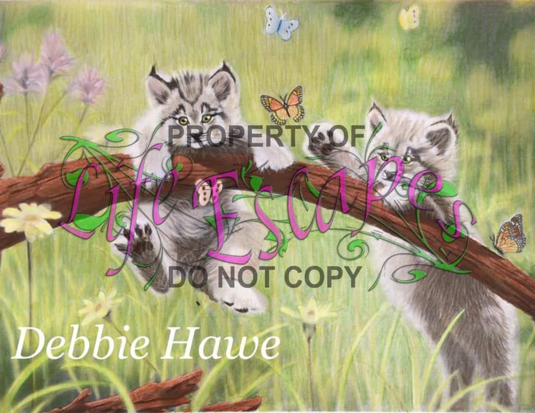 Debbie Hawe4